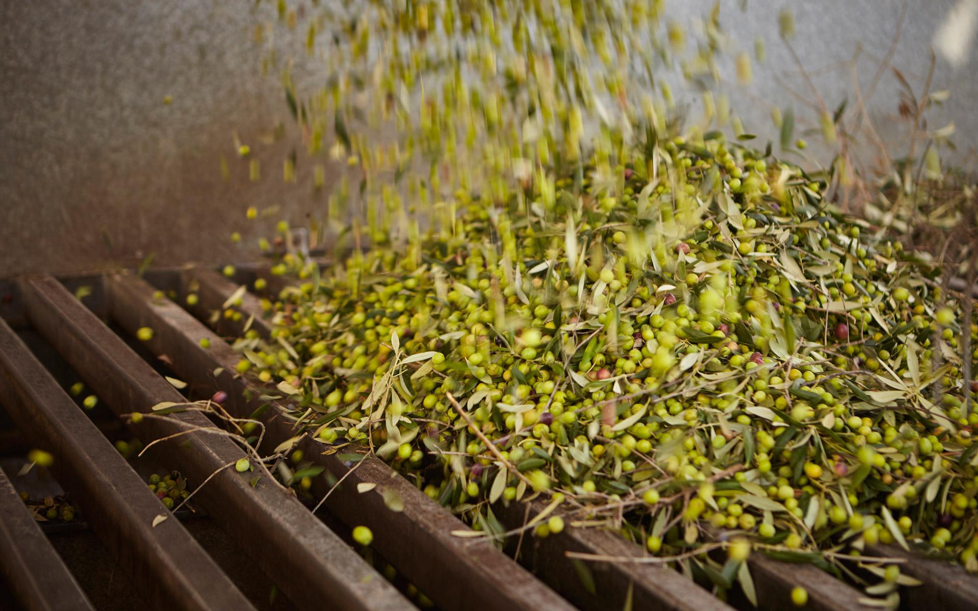 Świeża,<br/>hiszpańska oliwa